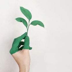 environmental-web